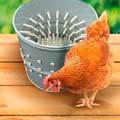 Товары для чистки домашней и дикой птицы