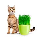 все для кошек