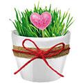 растущие сувениры на 14 февраля