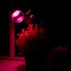 лампы для садовых растений