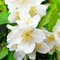 семена однолетних садовых цветков