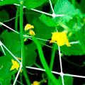 Сетки для растений