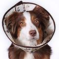 ветеринарные защитные воротники