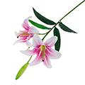 сувенирные искусственные цветы для флористики