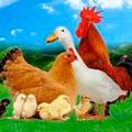 Аксессуары для птицеводства