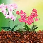 Грунты для орхидей