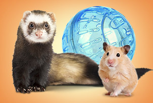 Products for Rodents & Ferrets