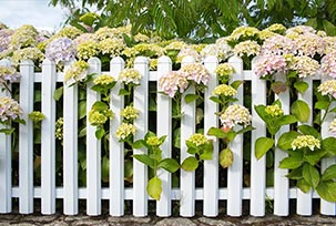 Garden Fences & Supports