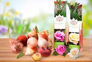 Bulbs & Young Plants