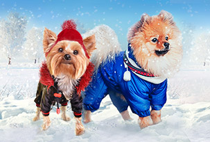 Winter Pet Products
