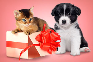Gift Baskets for Animals