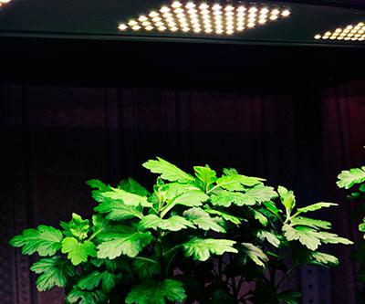 Подсветка растения