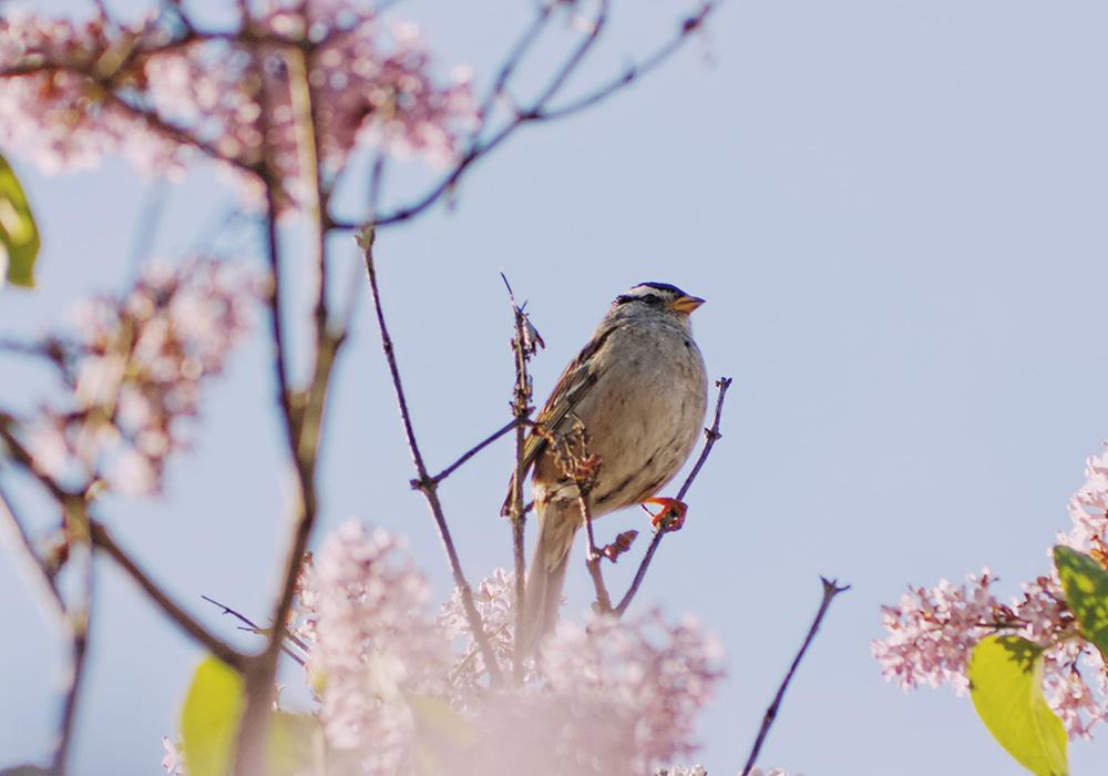 Наблюдение за птицами