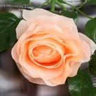 """Цветы искусственные """"Уральская роза"""" персиковая - фото 1692558"""