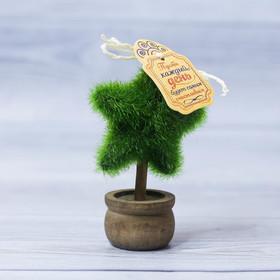 Декоративное мини–дерево «Пусть день будет счастливым», 11,2 х 7,2 см Ош