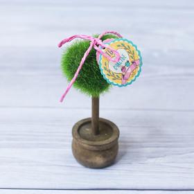Декоративное мини–дерево «Ты моё счастье», 11,2 х 7,2 см Ош