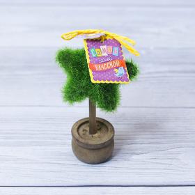 Декоративное мини–дерево «Самой классной», 11,2 х 7,2 см Ош