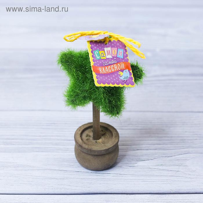 Декоративное мини–дерево «Самой классной», 11,2 х 7,2 см