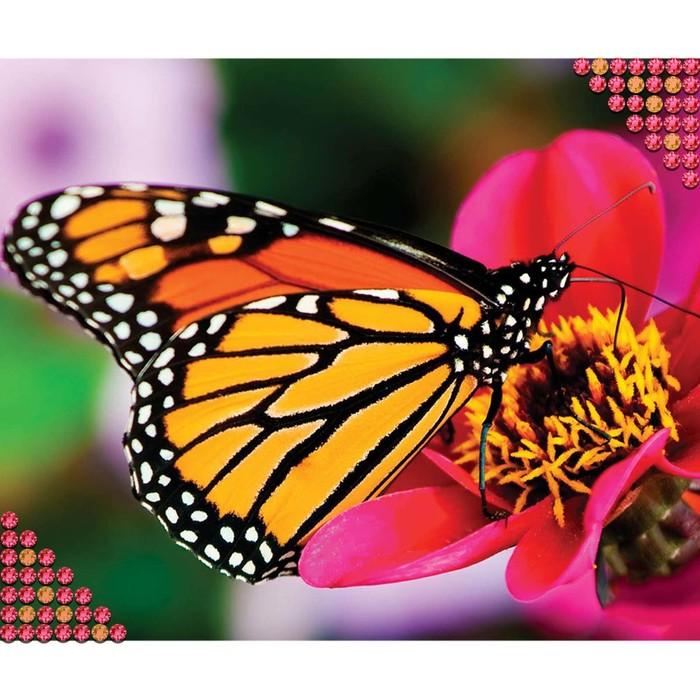 """Алмазная вышивка круглыми стразами с частичным заполнением """"Бабочка на цветке"""" 27 х 40 см"""
