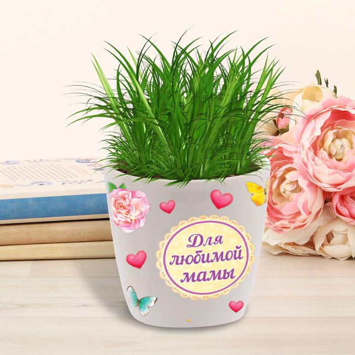 """Растущий подарок,трава в горшочке с наклейками """"Для любимой мамы"""""""