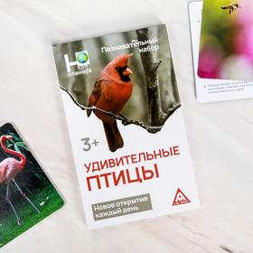 Энциклопедия в карточках «Удивительные птицы», 24 карточки
