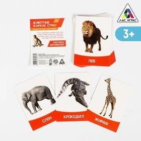 Обучающие карточки «Изучаем английский. Животные жарких стран», 16 штук, 3+
