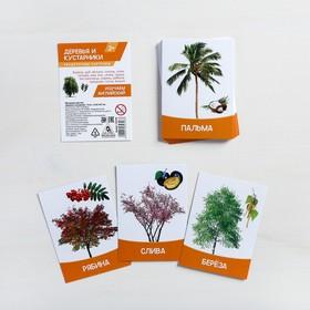 Обучающие карточки, английский язык 'Деревья и кустарники' 16 шт. Ош