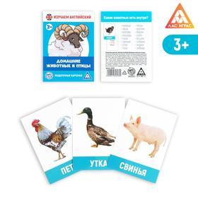 Обучающие карточки, английский язык «Домашние животные и птицы», 16 шт.