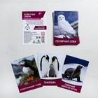 """Обучающие карточки, английский язык """"Животные Севера"""" 16 шт."""