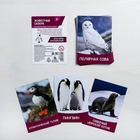 "Flashcards, English ""Animals of the North"" 16 PCs."