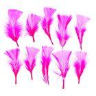 Набор перьев для декора 10 шт, размер 1 шт 10*4 цвет ярко розовый