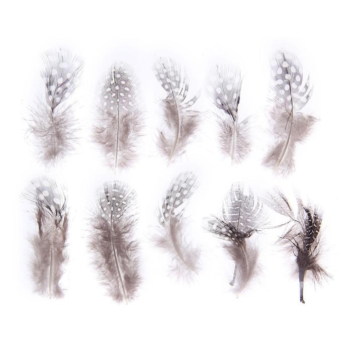 Набор перьев для декора 10 шт, размер 1 шт 5*2 цвет коричневый с белым