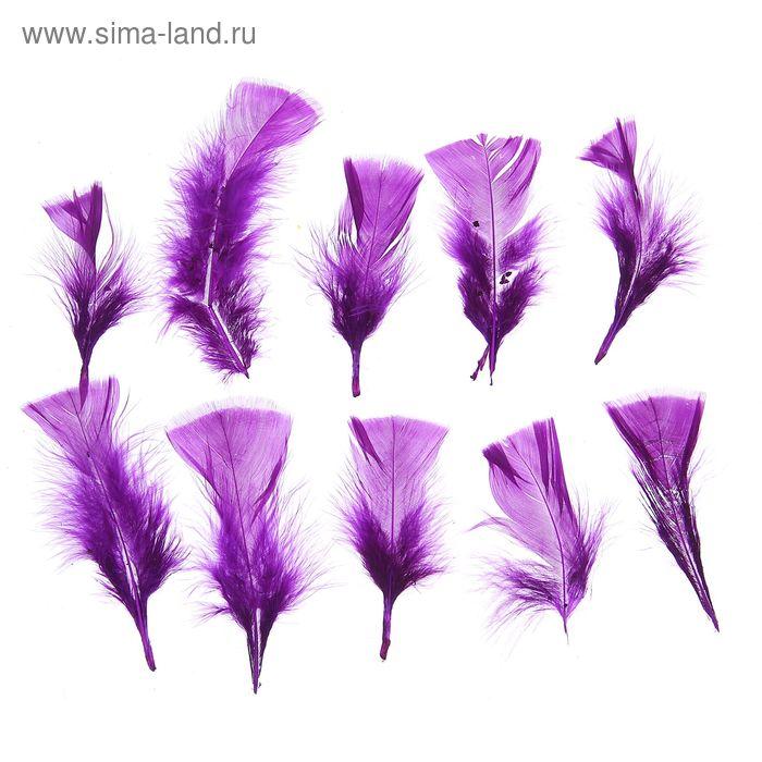 Набор перьев для декора 10 шт, размер 1 шт 10*4 цвет фиолетовый
