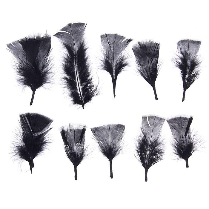 Набор перьев для декора 10 шт, размер 1 шт 10*4 цвет черный