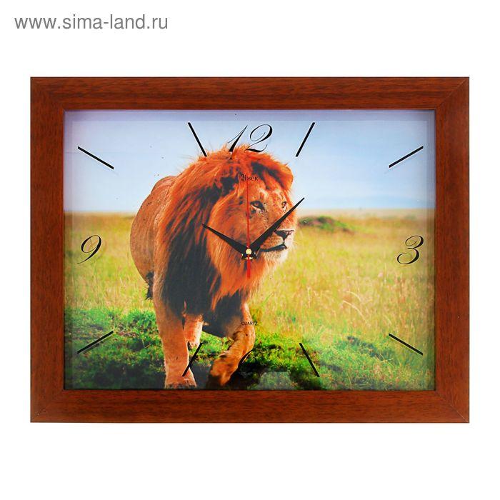 """Часы настенные """"Царь зверей"""", в багете 46х37 см"""