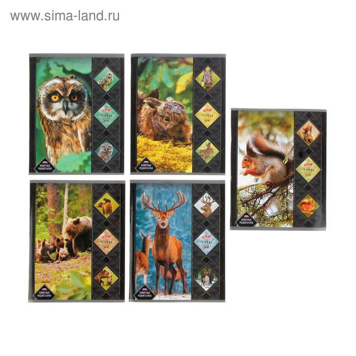 """Тетрадь 48 листов клетка """"Животные родного края"""", картонная обложка, 5 видов МИКС"""