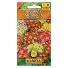 """Семена цветов Примула """"Колоссеа"""", смесь окрасок, Мн, 0,05 г"""