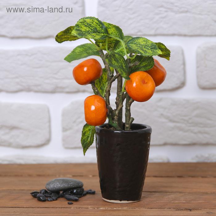 """Бонсай """"Дерево с мандаринами"""""""