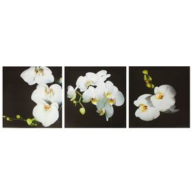 """Картина модульная на подрамнике """"Орхидея"""" 3шт.-28*28см;   28х84см"""