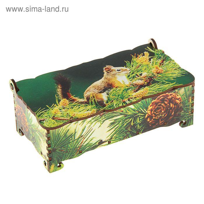 Шкатулка - купюрница «Белка», 17х9х5,8 см