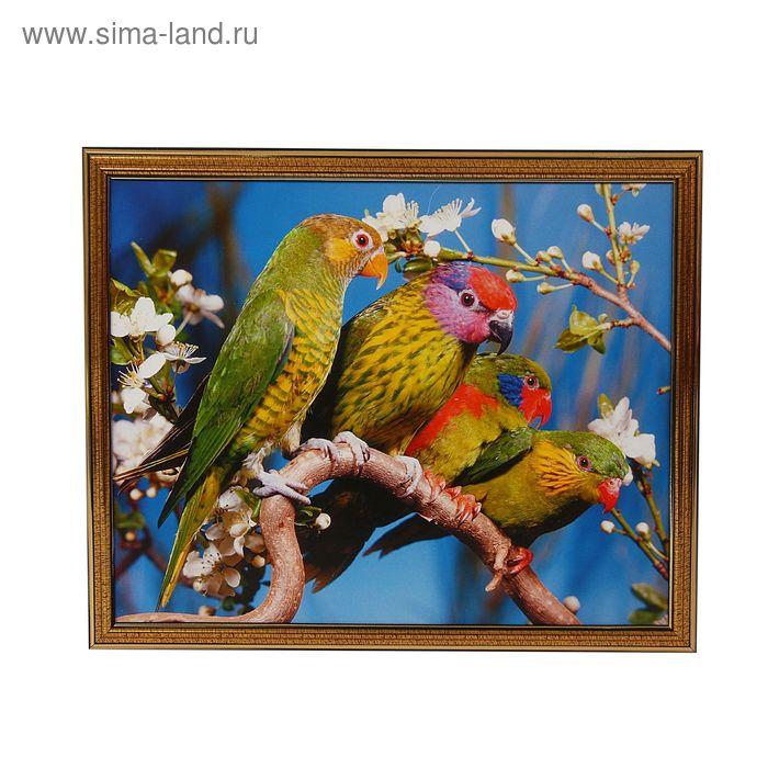 """Картина """"Четыре попугая"""""""