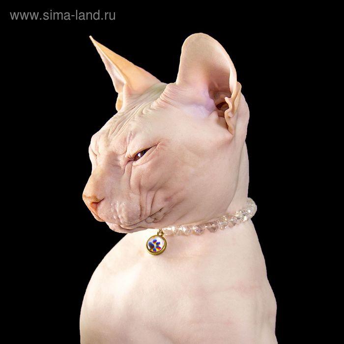 """Ожерелье для животных """"Блеск"""", обхват шеи 16 см"""