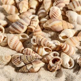 A set of shells 1-2 cm, 100 g