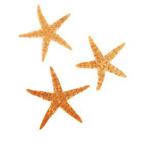 Набор из 3 морских звезд, размер каждой 6-10 см Ош