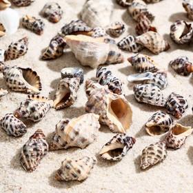 A set of shells 2.5-4.5 cm, 100 g