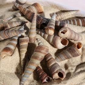 A set of shells 3-5.5 cm, 100 g