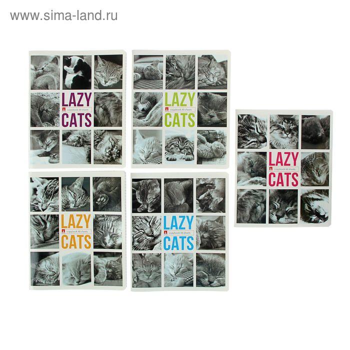 """Тетрадь 48 листов клетка """"Ленивые котята"""", картонная обложка, 5 видов МИКС"""