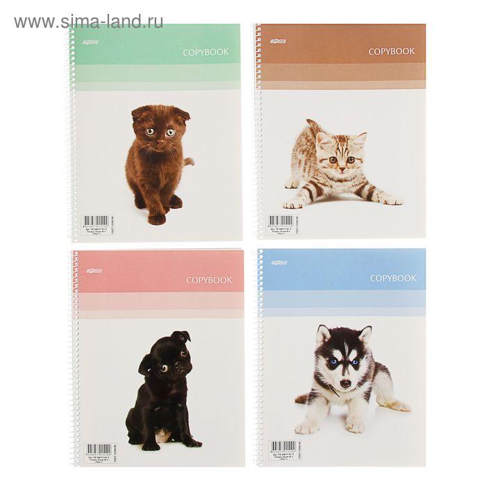 Тетрадь 48 листов клетка на гребне Pets-1, картонная обложка, ВД-лак, 4 вида МИКС