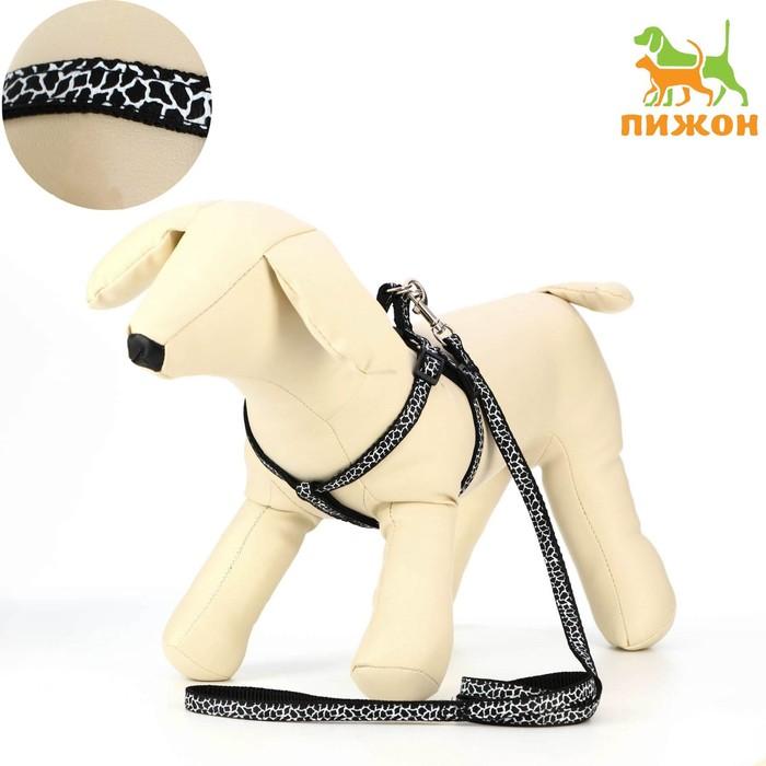 """Комплект """"Жираф"""", ширина 1 см, поводок 120 см, шлейка 26-41 см, черно-белый"""