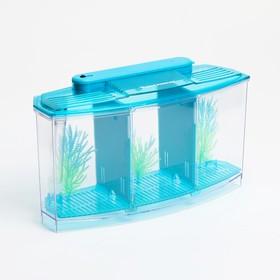 Аквариум-отсадник трехсекционный с подсветкой и светящимися растениями, голубой